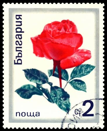 Bulgaria - CIRCA 1970: a stamp printed in Bulgaria shows  flowers  the rose , circa 1970 photo