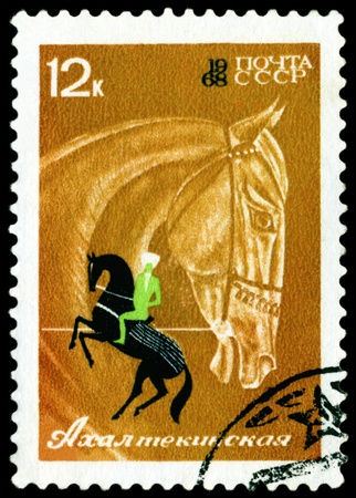 USSR- CIRCA 1968: a stamp  printed  USSR  by  shows  Altekin horse performing, circa 1968 photo