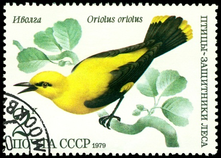 RUSSIA - CIRCA 1979 : A stamp printed by Russia shows bird an Oriolus oriolus from the series �Birds - a protectors wood�, circa 1979 Stock Photo - 9285509