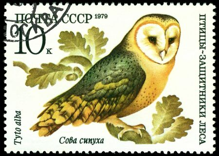 RUSSIA - CIRCA 1979 : A stamp printed by Russia shows bird an Owl barn owl from the series �Birds - a protectors wood�, circa 1979 Stock Photo - 9285508