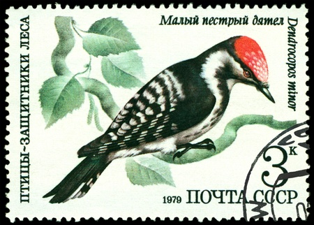 RUSSIA - CIRCA 1979 : A stamp printed by Russia shows bird an Small motley woodpecker from the series �Birds - a protectors wood�, circa 1979 Stock Photo - 9285510
