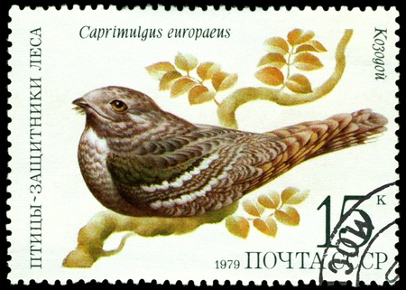 RUSSIA - CIRCA 1979 : A stamp printed in Russia shows bird an Whippoorwill from the series �Birds - a protectors wood�, circa 1979 Stock Photo - 9285511