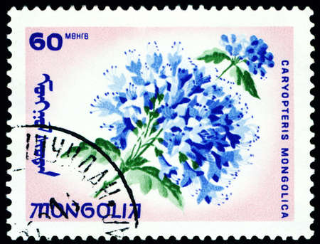 flowerses: Mongolia - CIRCA 1966: a stamp printed in Mongolia shows image flowerses with the inscription �caryopteris mongolica�, series, circa 1966