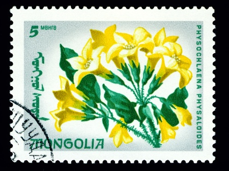 flowerses: Mongolia - CIRCA 1966: a stamp printed in Mongolia shows image flowerses with the inscription �physochlaena physaloides�, series, circa 1966
