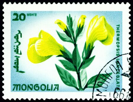 flowerses: Mongolia - CIRCA 1966: a stamp printed in Mongolia shows image flowerses with the inscription �thermopsis lanceolata�, series, circa 1966  Stock Photo