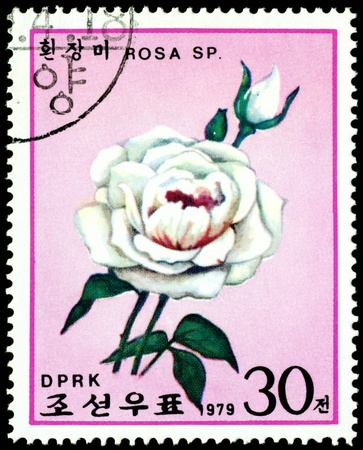 DPRK - CIRCA 1979: a stamp printed in DPRK shows image blanching rose, series, circa 1979 Stock Photo - 9345399