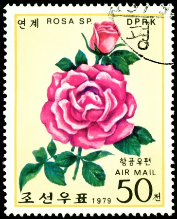 DPRK - CIRCA 1979: a stamp printed in DPRK shows image crimson rose, series, circa 1979 Stock Photo - 9345395