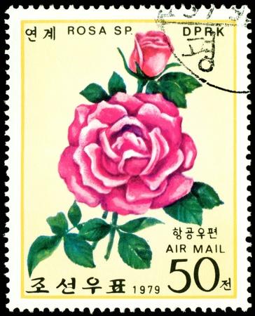 DPRK - CIRCA 1979: a stamp printed in DPRK shows image crimson rose, series, circa 1979 Фото со стока