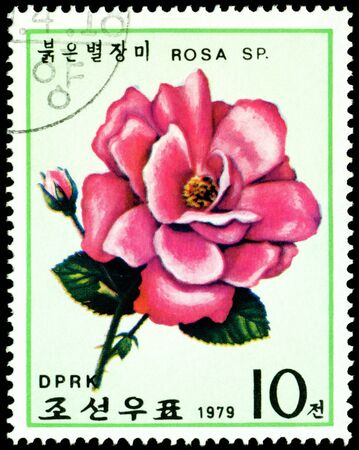 DPRK - CIRCA 1979: a stamp printed in DPRK shows image  dark red rose, series, circa 1979 photo