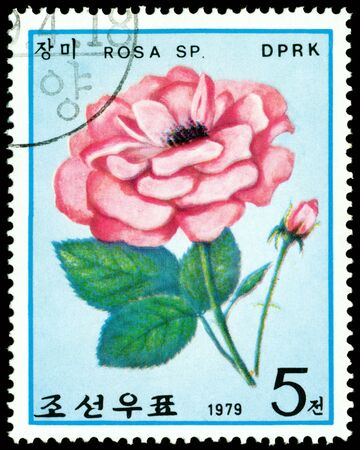 DPRK - CIRCA 1979: a stamp printed in DPRK shows image  light red rose, series, circa 1979 Фото со стока