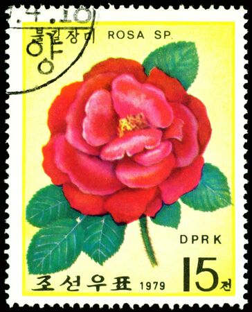 DPRK - CIRCA 1979: a stamp printed in DPRK shows image red rose, series, circa 1979 photo