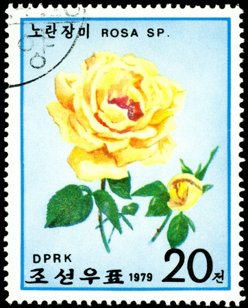 DPRK - CIRCA 1979: a stamp printed in DPRK shows image Yellow rose  , series, circa 1979 photo