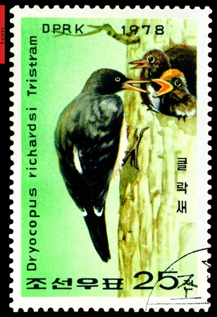 DPRK - CIRCA 1978: a stamp printed in DPRK,  shows   Woodpecker  feeding  two young., series, circa 1978 Stock Photo - 9358262
