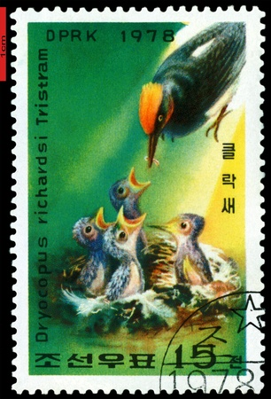DPRK - CIRCA 1978: a stamp printed in DPRK,  shows   Woodpecker  feeding  young., series, circa 1978 Stock Photo - 9358261