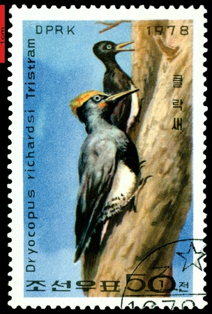 DPRK - CIRCA 1978: a stamp printed in DPRK,  shows   Woodpecker  on tree trunk., series, circa 1978 Stock Photo - 9358264