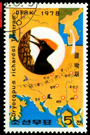 DPRK - CIRCA 1978: a stamp printed in DPRK shows oreal spreading White-Bellied Black Woodpecker, series, circa 1978 Stock Photo - 9358260