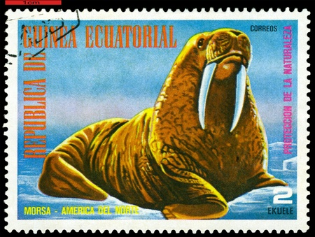 postage stamp: EQUATORIAL GUINEA - CIRCA 1977: A Stamp sheet printed in EQUATORIAL GUINEA shows a collection of Wild animals of the North America, Walrus, series, circa 1977