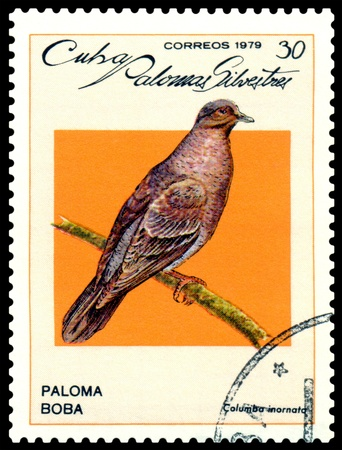 CUBA - CIRCA 1979: A stamp printed by Cuba, shows  bird Columba inornata, circa 1979