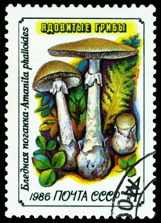 USSR - CIRCA 1986: A stamp printed  by USSR,  shows  Amanita  phalloides, series Toadstools, circa 1986 Stock Photo - 10263654