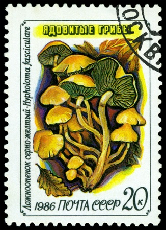 postmail: USSR - CIRCA 1986: A stamp printed  by USSR,  shows  Hipholoma fasciculare, series Toadstools, circa 1986