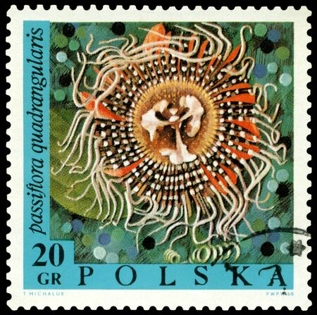 POLAND - CIRCA 1967: a stamp printed in Poland shows flower  Passiflora quadrangularis, circa 1967 photo