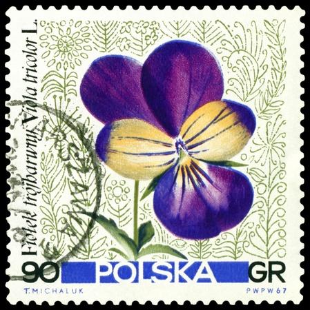 POLAND - CIRCA 1967: a stamp printed in Poland shows flower  Viola trikolor, circa 1967 photo