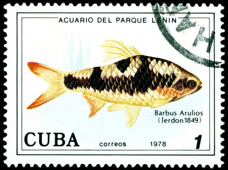 CUBA - CIRCA 1978: a stamp printed by Cuba  show the fishes with the inscription �Barbus  Arulios�, Lenin Park Aquarium, Havana.  Series, circa 1978 Stock Photo - 10550431