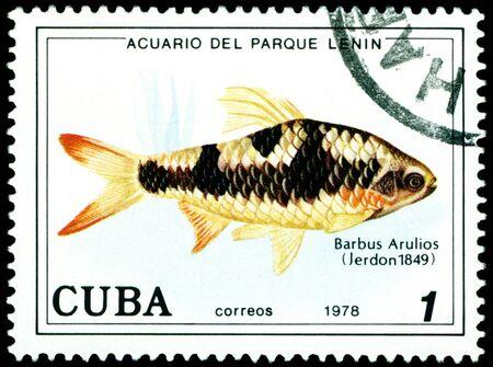 CUBA - CIRCA 1978: a stamp printed by Cuba  show the fishes with the inscription �Barbus  Arulios�, Lenin Park Aquarium, Havana.  Series, circa 1978 Stock Photo - 10550431