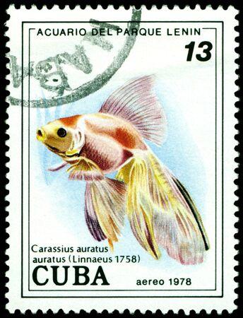 CUBA - CIRCA 1978: a stamp printed by Cuba  show the fishes with the inscription �Carassius auratus�, Lenin Park Aquarium, Havana.  Series, circa 1978 Stock Photo - 10550437