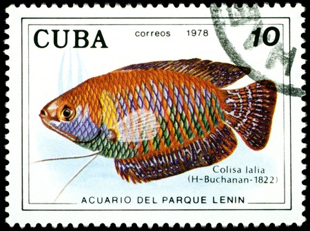 CUBA - CIRCA 1978: a stamp printed by Cuba  show the fishes with the inscription �Colisa lalia�, Lenin Park Aquarium, Havana.  Series, circa 1978 Stock Photo - 10550440