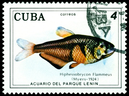 CUBA - CIRCA 1978: a stamp printed by Cuba  show the fishes with the inscription �Hiphessobrycon Flammeus�, Lenin Park Aquarium, Havana.  Series, circa 1978 Stock Photo - 10550433