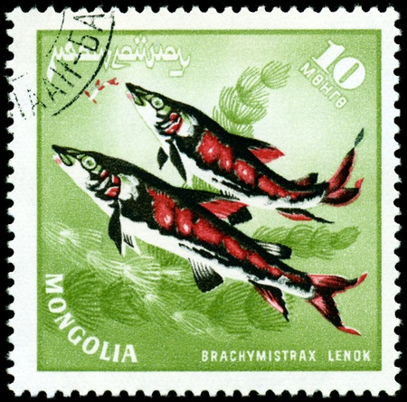 MONGOLIA - CIRCA 1978: a stamp printed by Mongolia show the fishes with the inscription Stock Photo - 10601949