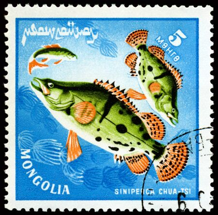 MONGOLIA - CIRCA 1978: a stamp printed by Mongolia show the fishes with the inscription Stock Photo - 10601951