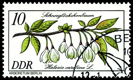 flowerses: GDR - CIRCA 1981: A stamp printed in GDR shows image of a  Flowerses  with the inscription �Halesia Carolina�.  Series
