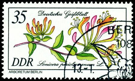 """philatelic: GDR - CIRCA 1981: A stamp printed in GDR shows image of a  Flowerses  with the inscription """" Lonicera periclymenum L."""".  Series   Stock Photo"""
