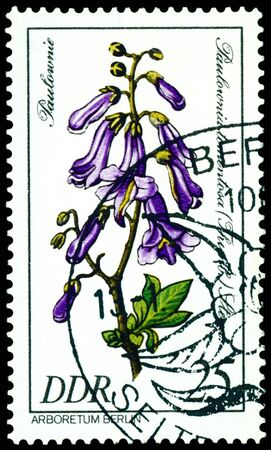 GDR - CIRCA 1981: A stamp printed in GDR shows image of a  Flowerses  with the inscription �Paulownia tomentosa�.  Series   photo