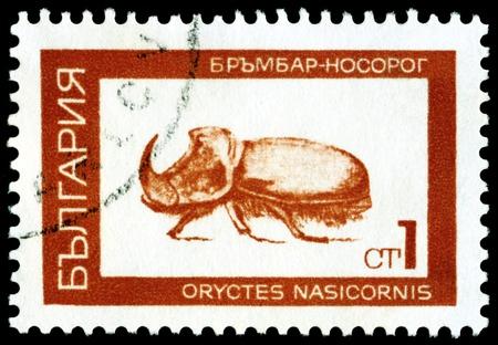 oryctes: BULGARIA - CIRCA 1968: A stamp printed  by  Bulgaria  shows  Rhinoceros beetle ( Oryctes nasicornis. L), series beetle, circa 1968