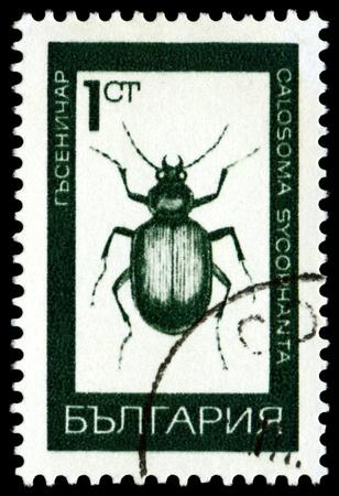 BULGARIA - CIRCA 1968: A stamp printed  by  Bulgaria  shows  Ground  beetle ( Calosoma Sycophanta . L), series beetle, circa 1968  photo