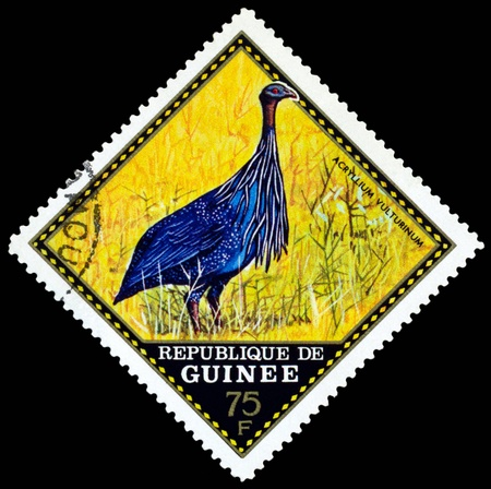 perforated stamp: Republique de Guinee  - CIRCA 1976 : A stamp printed in Republique de Guinee  shows bird Acryllium vulturinum, series, circa 1976