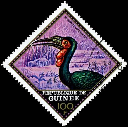 guinee: Republique de Guinee  - CIRCA 1976 : A stamp printed in Republique de Guinee  shows  bird Bucorvus Leadbeateri, series, circa 1976 Stock Photo