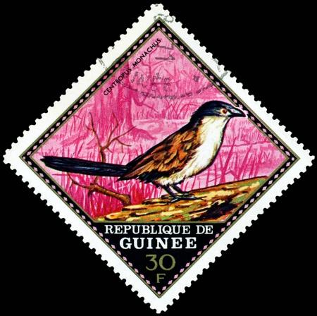 guinee: Republique de Guinee  - CIRCA 1976 : A stamp printed in Republique de Guinee  shows  bird  Centropus Monachus, series, circa 1976
