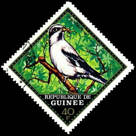 guinee: Republique de Guinee  - CIRCA 1976 : A stamp printed in Republique de Guinee  shows  bird Lanius  Excubitor, series, circa 1976