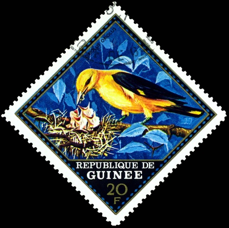Republique de Guinee  - CIRCA 1976 : A stamp printed in Republique de Guinee  shows  bird Oriolus  Oriolus, series, circa 1976 Stock Photo - 11641256