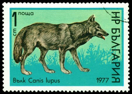 BULGARIA - CIRCA 1977  A stamp printed by  Bulgaria shows  image of a Wolfs of the type Canis Lupus, circa 1977 photo