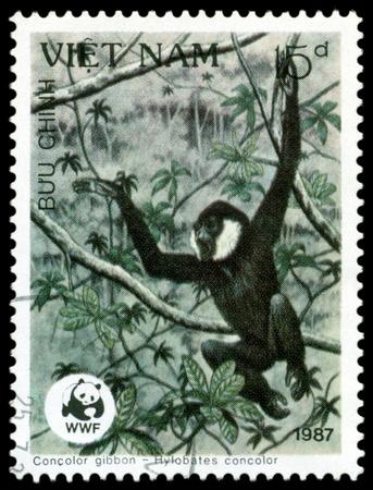 VIETNAM - CIRCA 1987  A stamp printed in Vietnam shows  monkey  Black  Gibbon   Hylobates ,  Scott 2004 catalogue number 1763, circa 1987