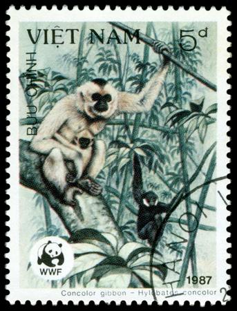 VIETNAM - CIRCA 1987  A stamp printed in Vietnam shows  monkey  Gibbon    Hylobates ,  Scott 2004 catalogue number 1761, circa 1987