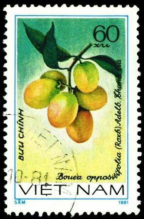 viet nam: VIET NAM- CIRCA 1981  a stamp printed in Viet nam shows image  The Fruits Bouea oppositifolia  L, series, circa 1981