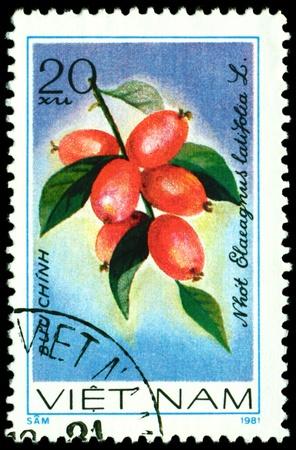 viet nam: VIET NAM- CIRCA 1981  a stamp printed in Viet nam shows image  The Fruits Elaeagnus latifolia  L, series, circa 1981