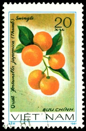 viet nam: VIET NAM- CIRCA 1981  a stamp printed in Viet nam shows image  The Fruits  Fortunella jponica L, series, circa 1981