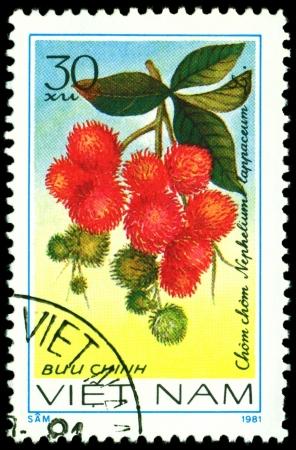 viet nam: VIET NAM- CIRCA 1981  a stamp printed in Viet nam shows image  The Fruits Nephelium lappaceum L, series, circa 1981